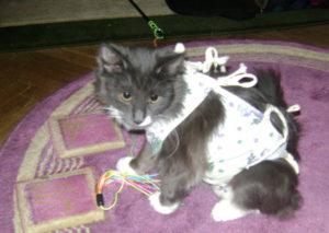 Кошка после операции не ест или не пьет