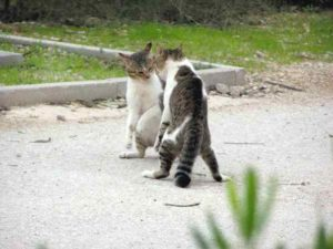 Как именно кошка защищается от врагов