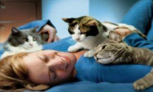 Как именно кошки лечат людей сами