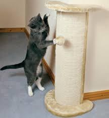 Как можно отучить кошку драть обои и мебель насовсем