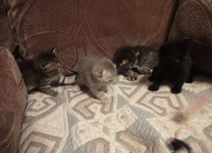 Как можно отучить кошку гадить на кровать