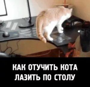 Как можно отучить кошку лазить на стол