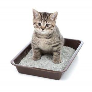 приучить кошку ходить в лоток