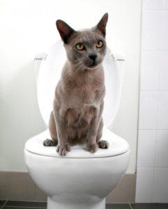 Как можно приучить кошку ходить в туалет на унитаз