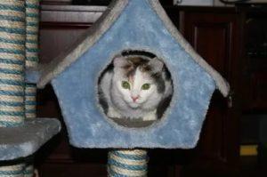 приучить кошку к домику
