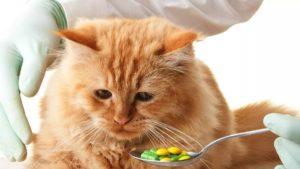 Как правильно давать кошке таблетки