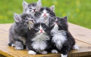 Лечение запора у кошки