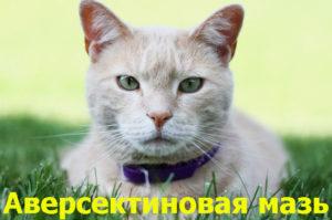 Как применять Аверсектиновую мазь для кошек