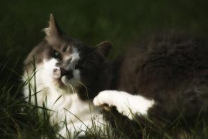 Как применять Ивермектин для кошек