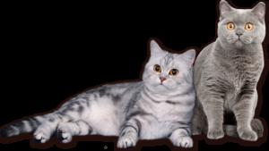 Мастометрин для кошек
