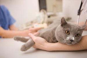 Можно ли лечить котов в домашних условиях