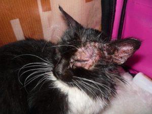 Как лечить кошку правильно