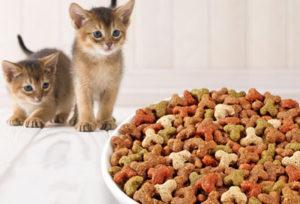 Какова норма сухого корма для кошек в день