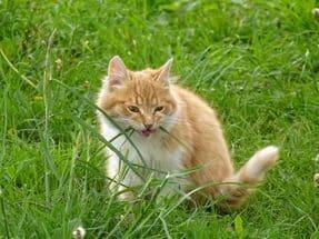 Кошки любят кушать траву