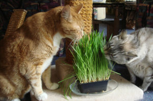 Какую траву едят и любят кошки
