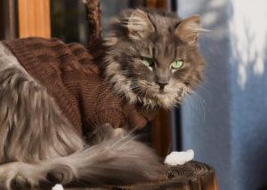 Может ли кошка заразиться гриппом от человека