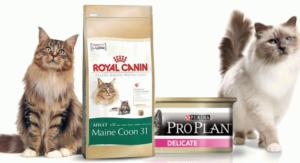 кормить кошку только сухим кормом
