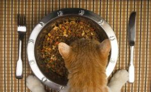 Можно ли кормить кошку только сухим кормом