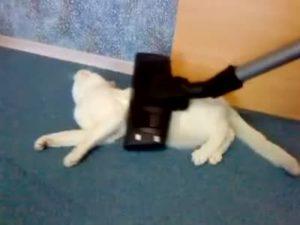 Как избавить кошку от страха