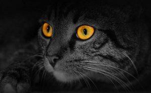 кошки хорошо видят в темноте