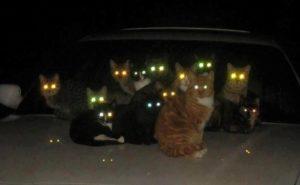 Почему кошки хорошо видят в темноте