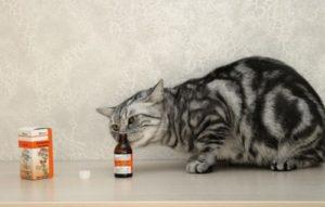 Почему кошки любят валерьянку и какие могут быть побочные эффекты