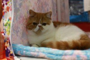 """кошки отзываются на """"кис-кис"""""""