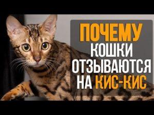 """Почему кошки отзываются на """"кис-кис"""""""