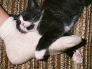 Почему кошки спят в ногах у человека и что это значит