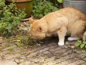 Почему кошку рвет желтой жидкостью