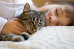 Какими болезнями может наградить обнимающая кошка