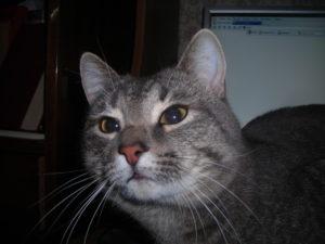 Почему у кошки пахнет изо рта тухлятиной