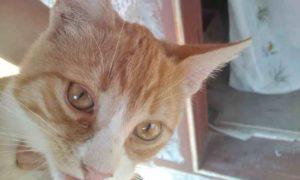 у кошки слезятся глаза и как ей помочь