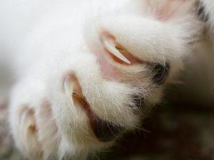 Какие проявления сигнализируют о том, что у вас болезнь кошачьих царапин