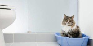 Симптомы дипилидиоза у кошек