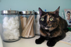 лечение геморроя у кошек