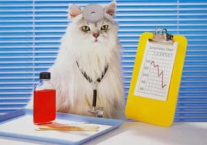 Симптомы и лечение сальмонеллеза у кошек