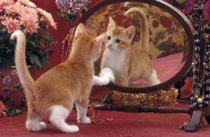 Что еще видят кошки в зеркале