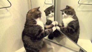 Кот смотрит на себя в зеркале