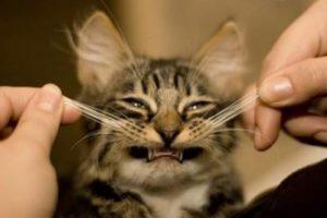 Зачем нужны усы и брови