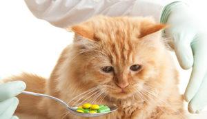 Симптомы и лечение нематод у кошек