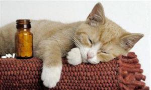 таблетки от глистов для кошек (2)