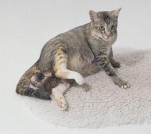Сколько времени длятся роды у кошки