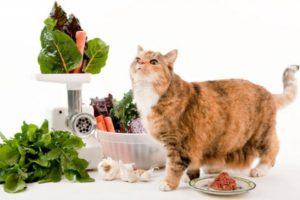 Какая еда  опасная для кошек