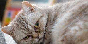 рак у кошек