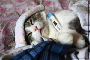 сотрясение мозга у кошек