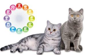 Как правильно выбрать витамины для кошек