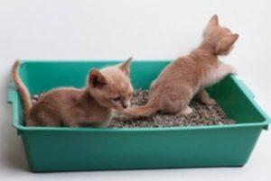 Размещение кошачьего лотка в доме