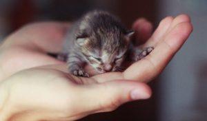 Как можно выкормить новорожденного котенка