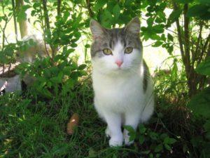Как быстро и эффективно отвадить кошек от участка